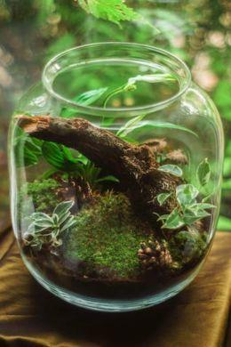 écologie envrai auvergne science nature écosystème environnement