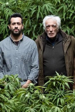 weed clermont cannabis médical thérapeutique traitement